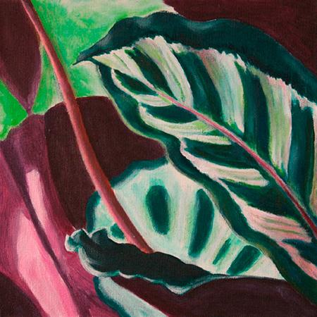 Maranta Acrílic sobre tela 30 x 30 cm