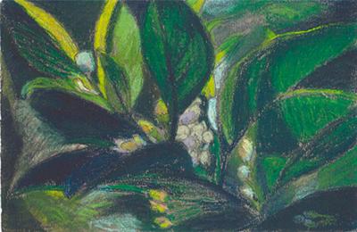 El taronger de la Laia Pintura al pastel 16 x 25 cm
